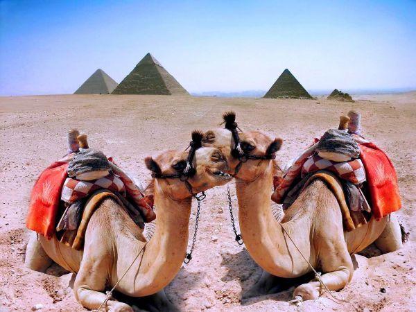 EGIPT 12_lii_8846125_sejur-ieftin-egipt-piramidele-din-platoul-giza-egipt-estival.ro.jpg